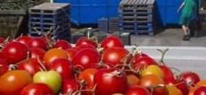 Rutas por la tomatima en Metro Valencia